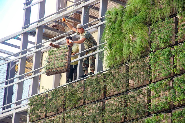 Going green: Vertical garden takes shape in Tbilisi