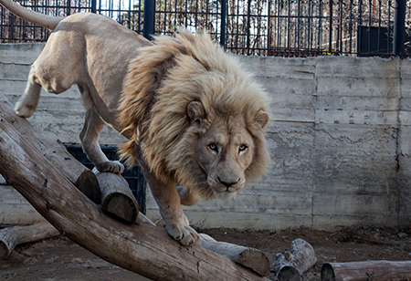 http://agenda.ge/files/news/049/tbilisi-zoo.jpg